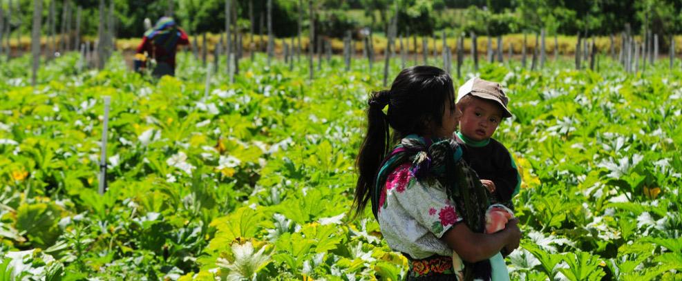 Los Estados deben actuar ya para proteger a los pueblos indígenas en migración